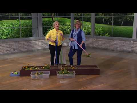 Weed Zinger Stand-up Weeding Tool with Spring Release on QVC