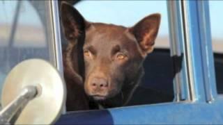 Nonton Red Dog    The Search   By Cezary Skubiszewski  Film Subtitle Indonesia Streaming Movie Download