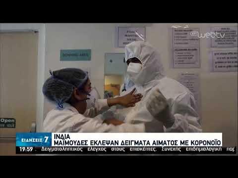Μαϊμούδες έκλεψαν δείγματα αίματος με κορονοϊό! | 29/05/2020 | ΕΡΤ