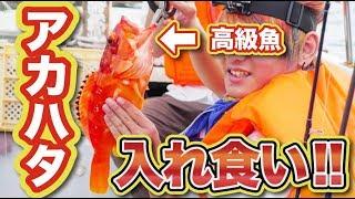 Video 【船釣り】高知の離島で高級魚が釣れまくり!アカハタ釣ったった【鵜来島】 MP3, 3GP, MP4, WEBM, AVI, FLV September 2018