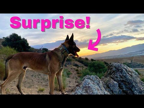 Το σοκ του σκύλου όταν αντίκρισε μετά από καιρό τον ιδιοκτήτη του!