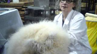 Angora Rabbits Are Some Of The Fluffiest You'll Ever See