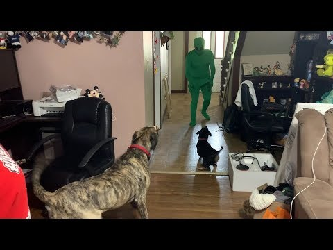 WILL THE GIANT DINOSAUR DOG SAVE US FROM THE ALIENS?!