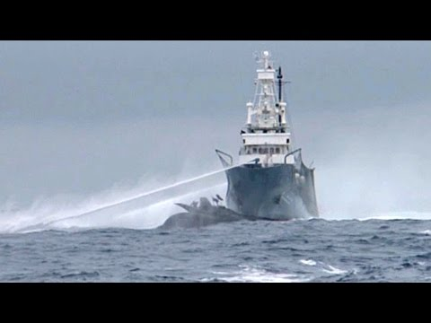 Japanese Whalers Ram Sea Shepherd Ship Ady Gil