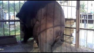 Ебля медведей