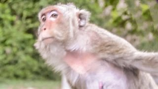 Chonburi Thailand  City pictures : BANG SAEN MONKEYS - CHONBURI - THAILAND