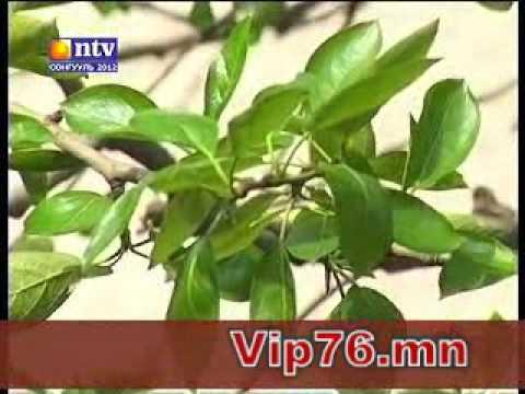 """NTV- """"Бидний түүчээ"""" нэвтрүүлэг"""