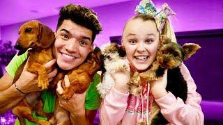 Video Christmas Puppy Surprise! (ft Jojo Siwa) MP3, 3GP, MP4, WEBM, AVI, FLV Desember 2018