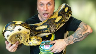 MY 20 FOOT SNAKE DESTROYED HER CAGE!! NOW WHAT?? | BRIAN BARCZYK by Brian Barczyk