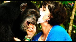 Loneliest Chimp on Earth Gets a Friend | Dodo Heroes by The Dodo