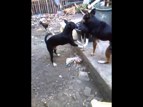 Video Dogs Fuck to death download in MP3, 3GP, MP4, WEBM, AVI, FLV January 2017