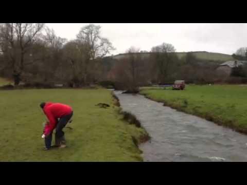 Hund hoppar över flod