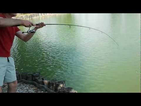 Zandofish in azione con un pesce gatto di 18 kg