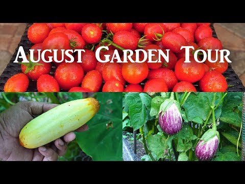 California Garden - Aug 2018 - Gardening Tips, Harvests & Much More!