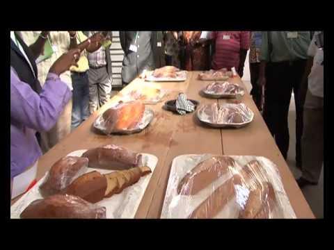Introduction de céréales locales dans la panification au Sénégal