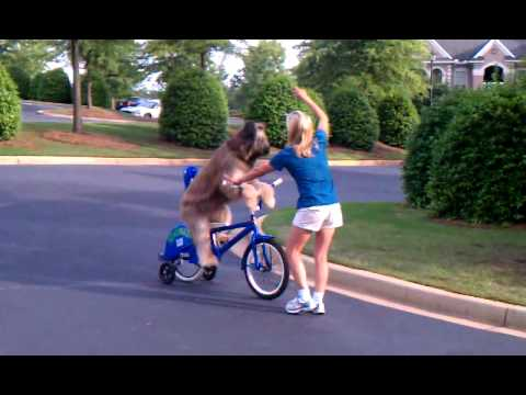 Amazing Dog rides bicycle