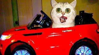 ДЕТИ УГНАЛИ МАШИНУ ПРАНКИ над кошечкой СИМКОЙ  Видео про котиков Bad Baby Driving Parents Car!!!