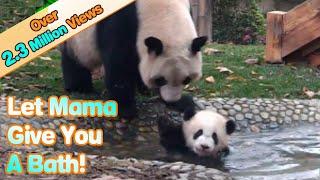 Video Panda mom forces her babe to take a bath MP3, 3GP, MP4, WEBM, AVI, FLV Mei 2017