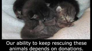 Rescuing kittens from under a house - Please subscribe! (By Eldad Hagar)