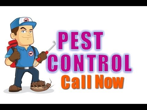 Pest Control Services in Spring TX – (281) 353-4427