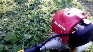 4. Lawn guy talks more about his chops with the Honda 35cc weedeater.