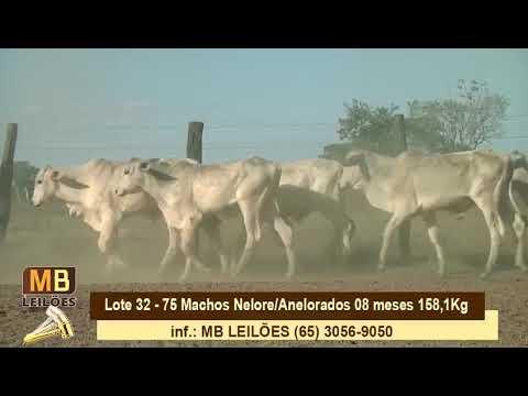 LEILÃO VIRTUAL CRIADORES DE NOVA MUTUM