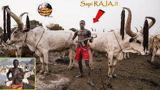 Video Hanya Untuk Menjaga Rajanya Sapi!! Lihat Apa Yang di Bawa Suku Mundari ini... WOW MP3, 3GP, MP4, WEBM, AVI, FLV Desember 2018