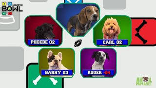 Puppy Bowl: Around the Bowl by Animal Planet