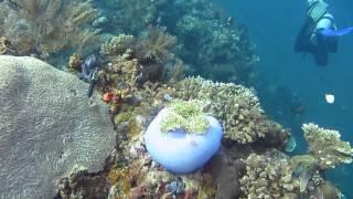 Diving USAT Liberty Wreck Tulamben, Bali Indonesia 2013