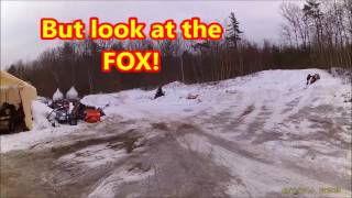 5. Snow Fox vs Arctic Cat 120cc