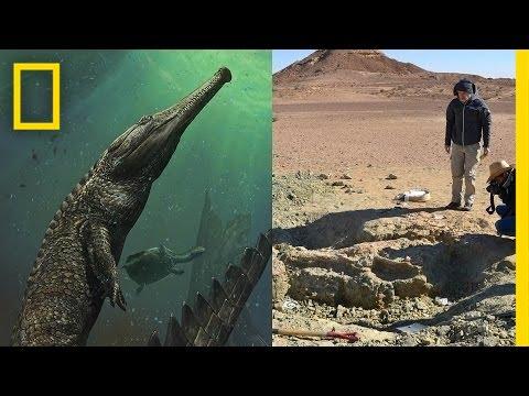 非洲沙漠找到不明骨骸 學者化驗之下震驚結果改變歷史!