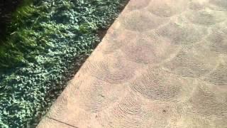 Sidewalk Song By Latch Key Kid