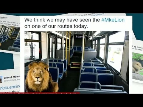 A mysterious lion-like creature caught on tape captivates Milwaukee. CNN's Ryan Young reports.