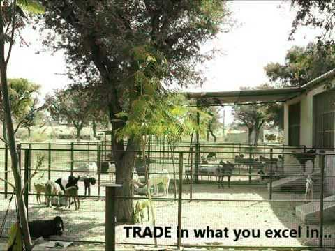 rajasthan goat farming - Watch Akbar K Qureshi owner Qureshi Farm www.qureshifarm.com explain his vision and the idea behind Qureshi Farm, the biggest goat farm in the Shekhawati reg...