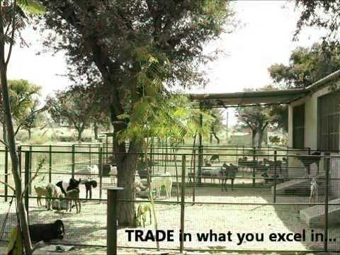 rajasthan goat farming - Watch Akbar K Qureshi owner Qureshi Farm www.qureshifarm.com explain his vision and the idea behind Qureshi Farm, the biggest goat farm in the Shekhawati reg...