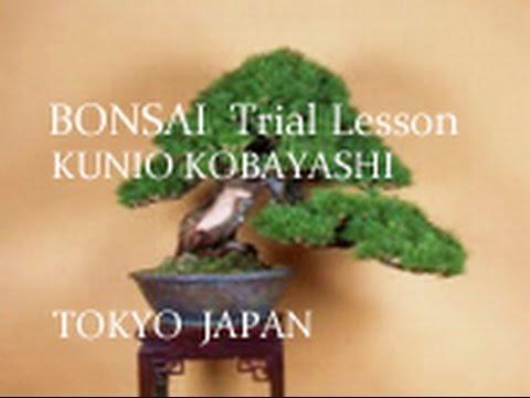 splendidi bonsai, consigli su come realizzarli