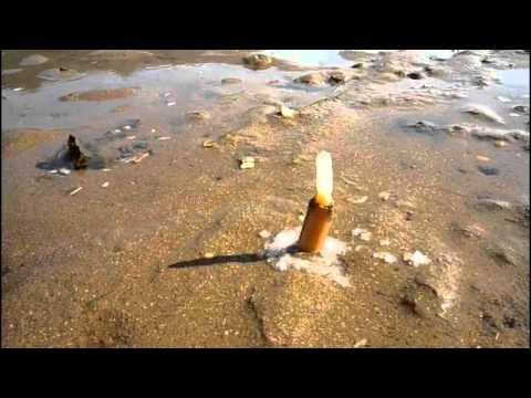 海邊意外出現奇特生物!