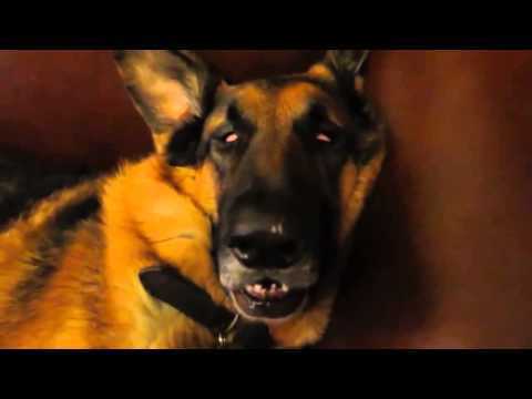 pets - Lovely Pets channel is share moments adorable and funny of animal. We are showing only best and funniest pet videos that i can find. We want to entertain and make you laugh. sorry for the mistakes!...