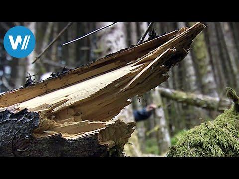 Norwegen: Försterinnen auf dem Vormarsch (360° - GEO Reportage)
