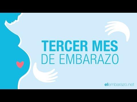 Tercer mes de embarazo | 3 meses de embarazo | El embarazo mes a mes