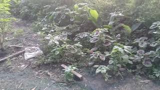 "Video Barokah dari hasil tanam holti kultural cabe dll.untuk pembelian tanah utk ""pontren NURUL hikmah"" MP3, 3GP, MP4, WEBM, AVI, FLV November 2018"