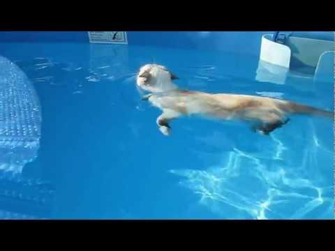 CAT swimming like a BOSS
