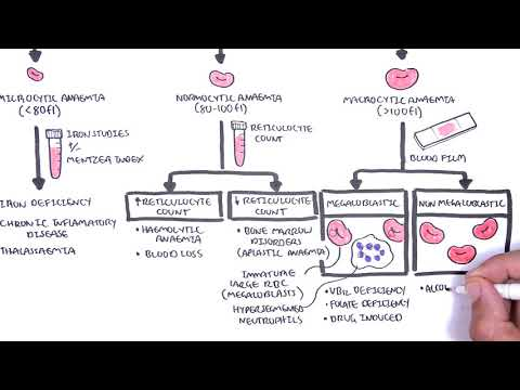 Anaemia (anemia) - Classification (microcytic, Normocytic And Macrocytic) And Pathophysiology
