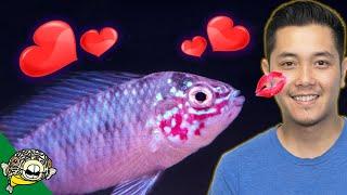 Rare Fish Unboxing by Aquarium Co-Op