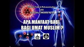Video Jika Babi Haram, Lalu Apa Manfaat Babi Bagi Umat Islam ? MP3, 3GP, MP4, WEBM, AVI, FLV Agustus 2019