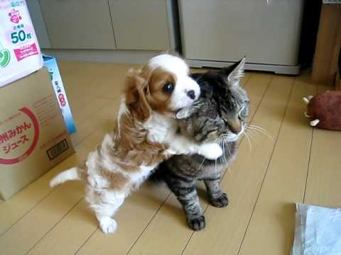 Cute Puppy Hugging Cat