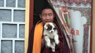 music: Lama Gyurme - Calling the Lama from Afar.