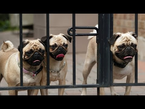 Funny Dogs Escaping Compilation 2013 [HD]