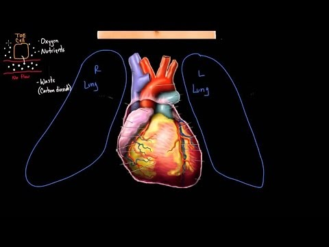 Meet The Heart Video Human Body Systems Khan Academy