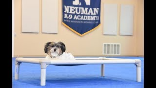 Bentley (Viewer Yorkshire Terrier) graduated from the dog training boot camp at Neuman K-9 Academy. This program included obedience commands to sit, stay, heel or walk on a loose leash, come when called, proper etiquette, no jumping up, meeting and greeting people under control, and running on a treadmill.Our dog training camp provides programs for the Yorkshire Terrier such as boot camp, obedience training, and puppy camp.Neuman K-9 Academy is a professional canine training school that provides board and train (inboard) for dogs, and fully trained dogs for sale.For more information visit: www.mndogtraining.comLocated in Hugo Minnesota just north of Minneapolis and St. Paul (MN).